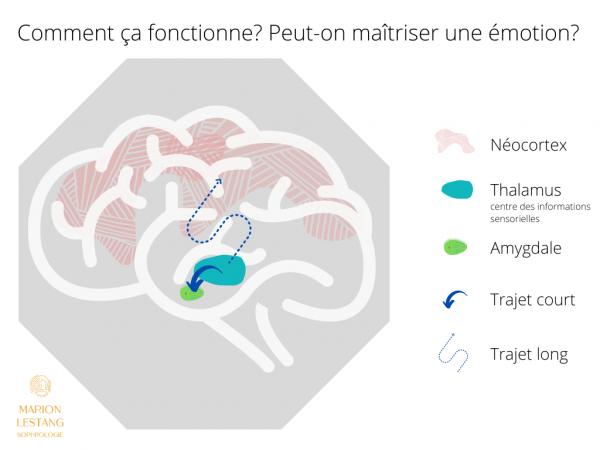 Émotions et cerveau